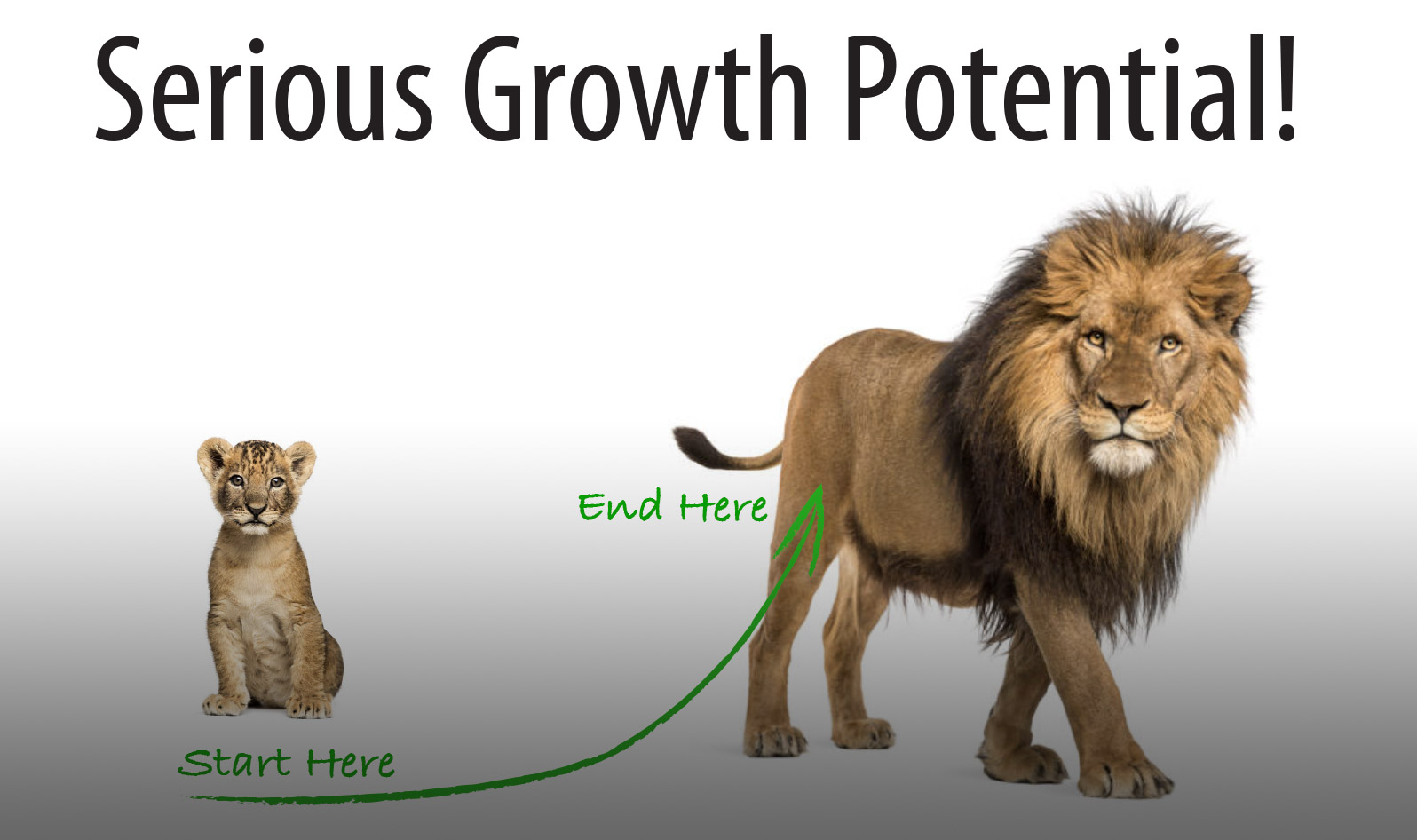 Here S Some Serious Growth Potential Vision Advisors Inc